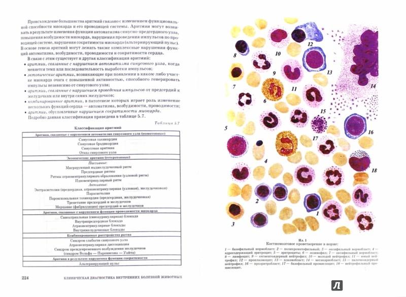 Иллюстрация 1 из 4 для Клиническая диагностика внутренних болезней животных. Учебник - Курдеко, Яшин, Мурзагулов, Ковалев, Волков | Лабиринт - книги. Источник: Лабиринт