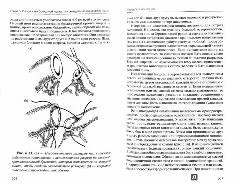Иллюстрация 1 из 4 для Терапия и хирургия щенков и котят - Хозгуд, Хоскинс, Девидсон, Смит | Лабиринт - книги. Источник: Лабиринт