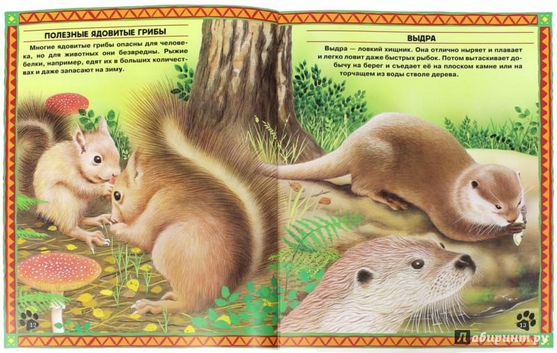 Иллюстрация 1 из 22 для Большие и маленькие. Интересные факты о животных | Лабиринт - книги. Источник: Лабиринт