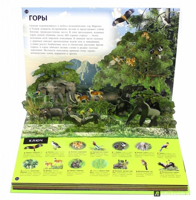 Иллюстрация 1 из 8 для Животные. 3D панорама - Барбара Тейлор | Лабиринт - книги. Источник: Лабиринт