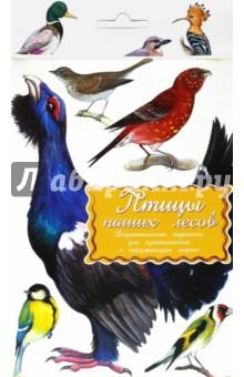 Купить Дидактические карточки. Птицы наших лесов, Маленький Гений-Пресс, Обучающие игры