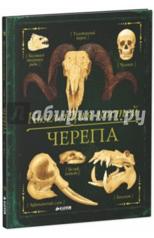 Коллекция костей. Черепа