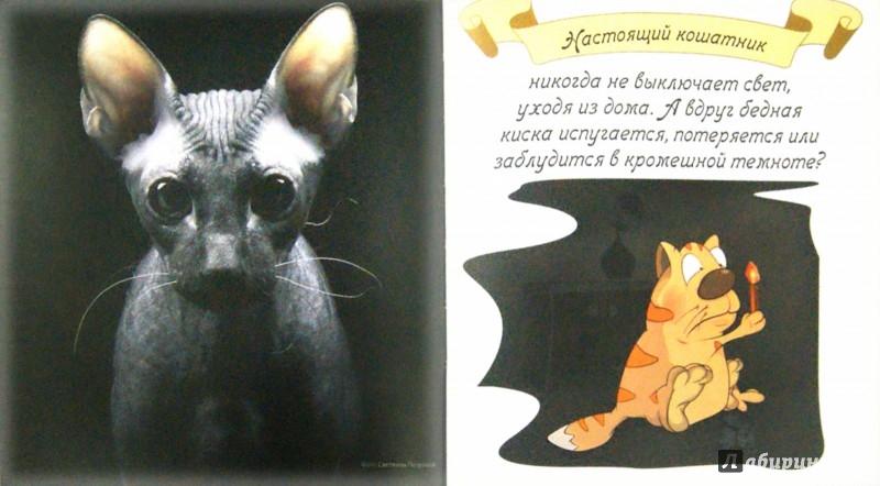Иллюстрация 1 из 19 для Котики - Евгения Гюнтер | Лабиринт - книги. Источник: Лабиринт