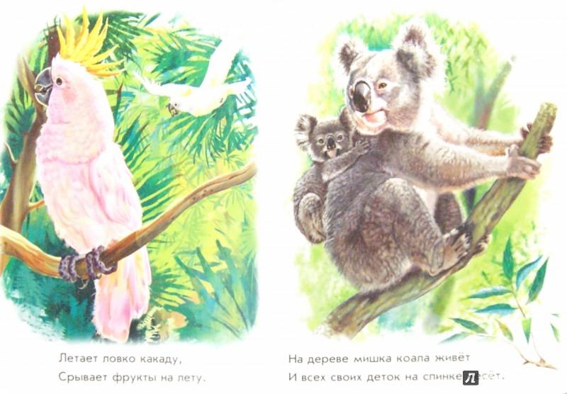 Иллюстрация 1 из 28 для Лесные зверята - Олеся Квитка | Лабиринт - книги. Источник: Лабиринт