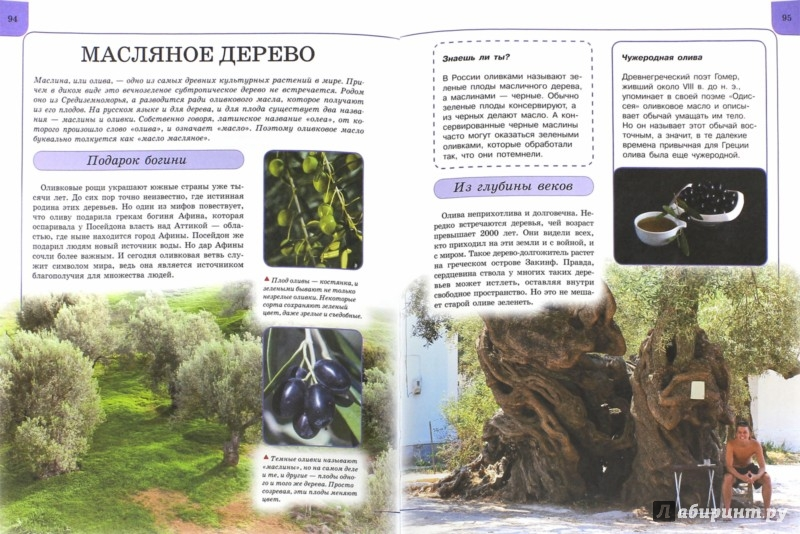 Иллюстрация 1 из 31 для Растения - Анна Спектор | Лабиринт - книги. Источник: Лабиринт