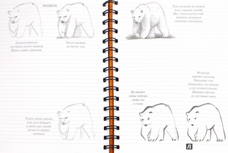 Иллюстрация 1 из 8 для Животные. Экспресс-курс рисования (коралл) - Н. Савельева | Лабиринт - канцтовы. Источник: Лабиринт
