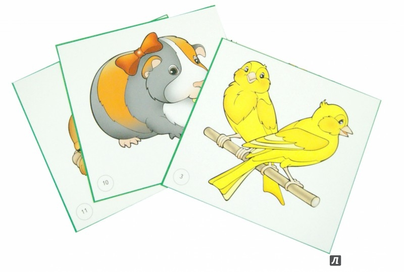 Иллюстрация 1 из 8 для Карточки. Домашние питомцы | Лабиринт - книги. Источник: Лабиринт