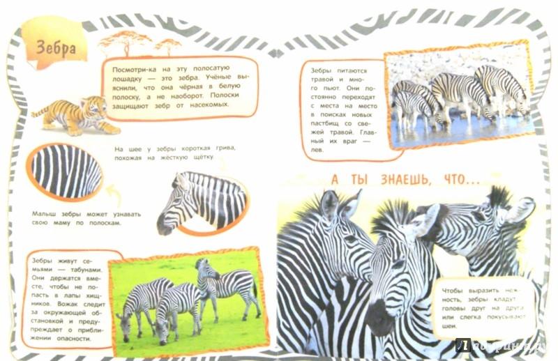 Иллюстрация 1 из 19 для Дикие животные - Наталья Колесникович | Лабиринт - книги. Источник: Лабиринт