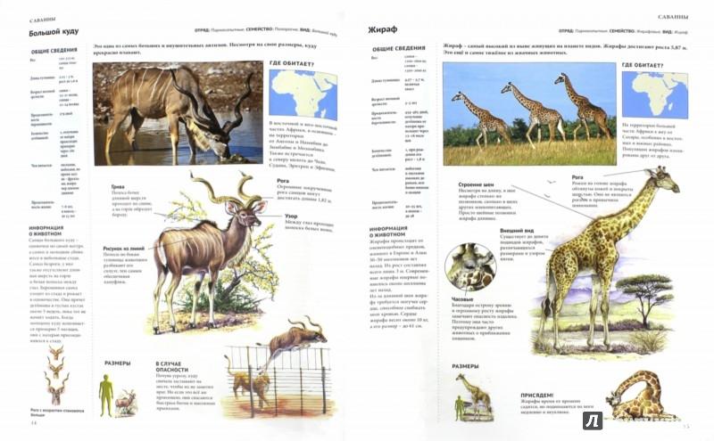 Иллюстрация 1 из 23 для Энциклопедия. Животный мир. Саванны | Лабиринт - книги. Источник: Лабиринт