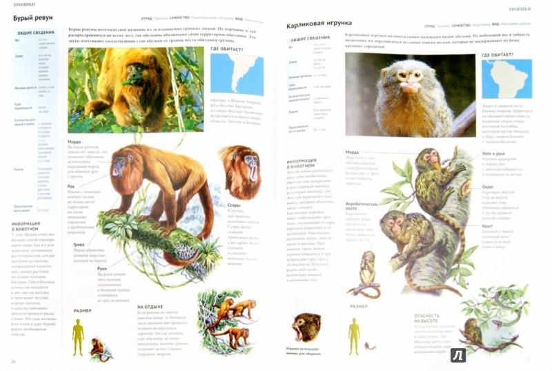 Иллюстрация 1 из 9 для Энциклопедия. Животный мир. Тропики | Лабиринт - книги. Источник: Лабиринт