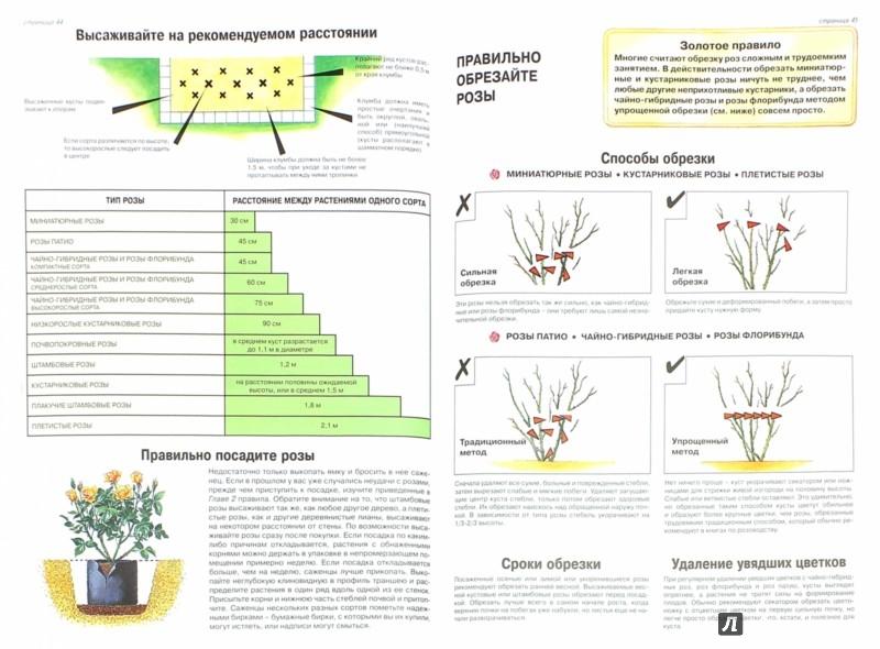 Иллюстрация 1 из 31 для Все о саде, за которым легко ухаживать - Дэвид Хессайон | Лабиринт - книги. Источник: Лабиринт