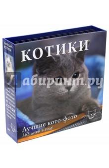 Календарь Котики. Лучшие кото-фото. 365 дней в году, универсальный