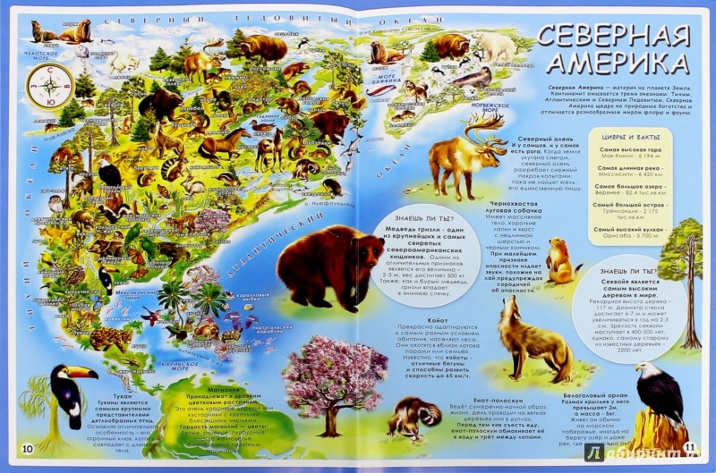 Иллюстрация 1 из 34 для Мой первый атлас мира. Животные и растения | Лабиринт - книги. Источник: Лабиринт