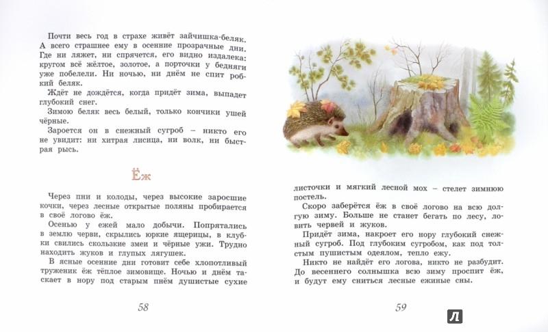 Иллюстрация 1 из 32 для Домик в лесу - Иван Соколов-Микитов | Лабиринт - книги. Источник: Лабиринт