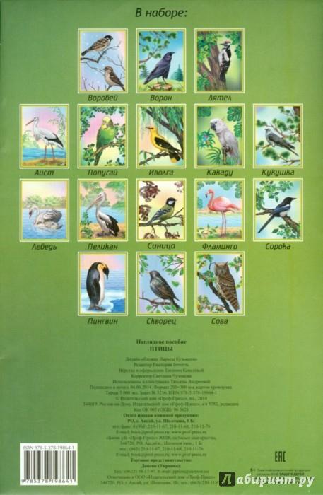 Иллюстрация 1 из 8 для Наглядное пособие А4. Птицы | Лабиринт - книги. Источник: Лабиринт