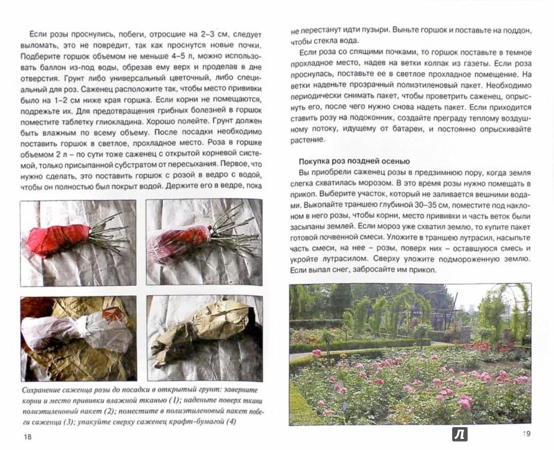 Иллюстрация 1 из 6 для Розы - Нина Резвина | Лабиринт - книги. Источник: Лабиринт