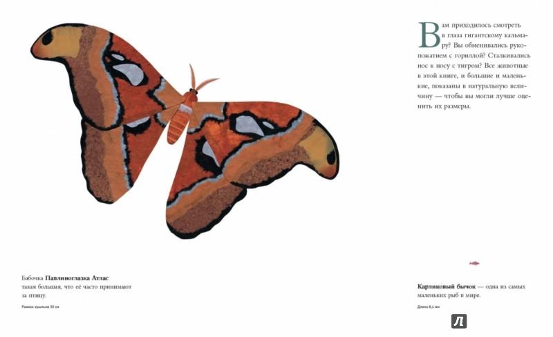 Иллюстрация 1 из 84 для Сравни! Животные в натуральную величину - Стив Дженкинс | Лабиринт - книги. Источник: Лабиринт