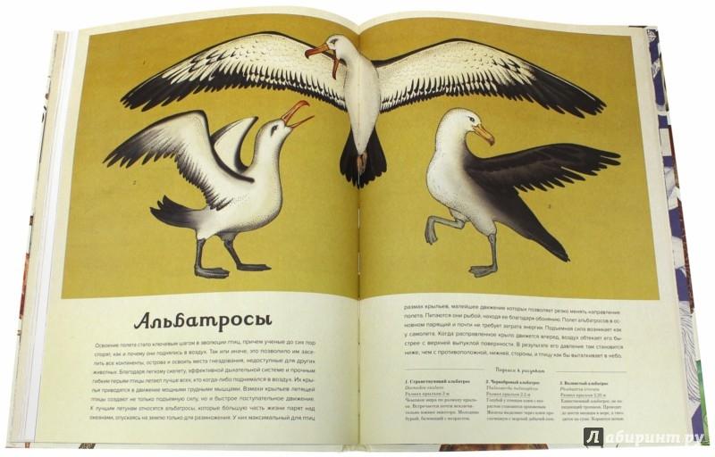 Иллюстрация 1 из 7 для Анималиум - Дженни Брум | Лабиринт - книги. Источник: Лабиринт