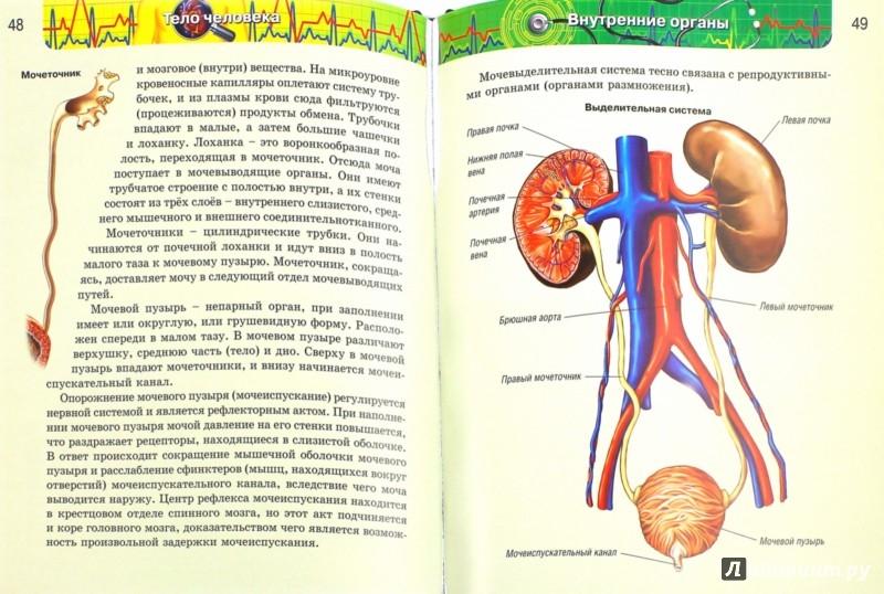 Иллюстрация 1 из 34 для Тело человека | Лабиринт - книги. Источник: Лабиринт