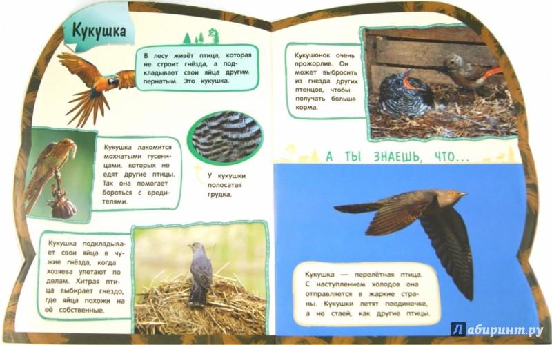 Иллюстрация 1 из 19 для Птицы - Ольга Лифенко | Лабиринт - книги. Источник: Лабиринт