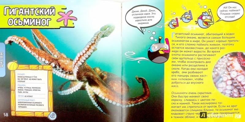 Иллюстрация 1 из 5 для Животные. Кругосветное путешествие по животному миру - Джилл Эсбаум | Лабиринт - книги. Источник: Лабиринт