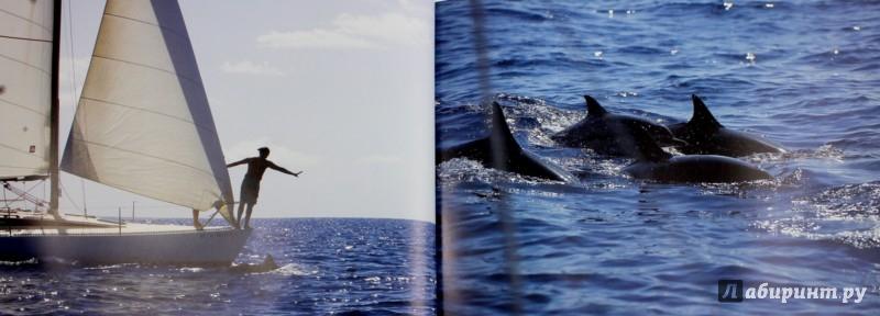 Иллюстрация 1 из 61 для Другое человечество. Дельфины - Гратовски, Гратовски | Лабиринт - книги. Источник: Лабиринт