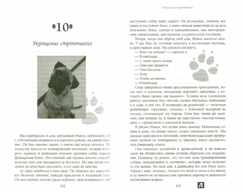 Иллюстрация 1 из 12 для Собака, которая спустилась с холма. Незабываемая история - Стив Дьюно | Лабиринт - книги. Источник: Лабиринт