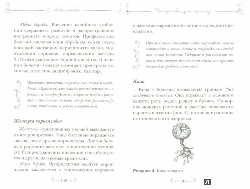 Иллюстрация 1 из 15 для Болезни и вредители овощей. Новейшие препараты для защиты - Елена Новиченкова | Лабиринт - книги. Источник: Лабиринт