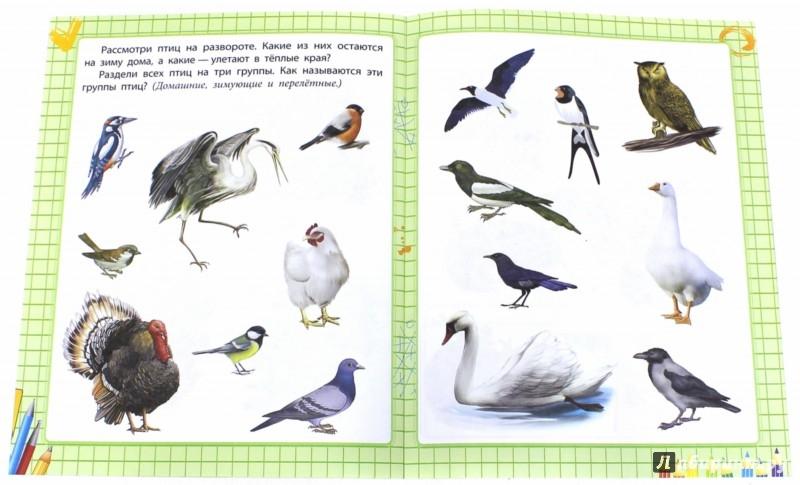 Иллюстрация 1 из 24 для Школа маленьких зверят. Окружающий мир для дошколят - Е. Ищук | Лабиринт - книги. Источник: Лабиринт