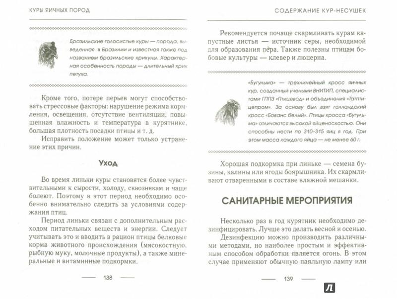 Иллюстрация 1 из 15 для Куры яичных пород - Илья Балашов   Лабиринт - книги. Источник: Лабиринт