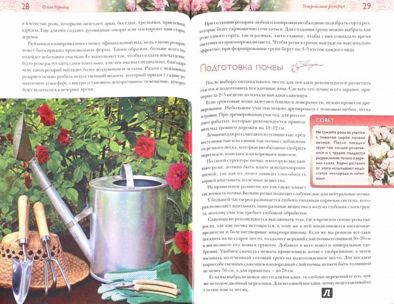 Иллюстрация 1 из 5 для Роскошные розы для вашего сада - Ольга Городец   Лабиринт - книги. Источник: Лабиринт