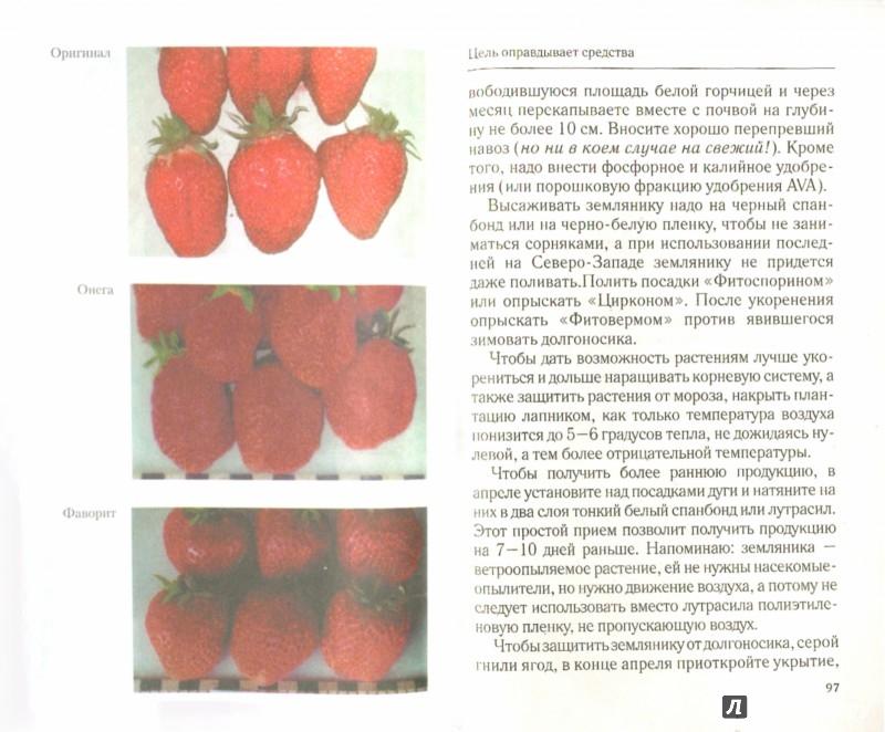 Иллюстрация 1 из 4 для Крупноплодная садовая земляника. Лучшие сорта - Кизима, Александрова | Лабиринт - книги. Источник: Лабиринт