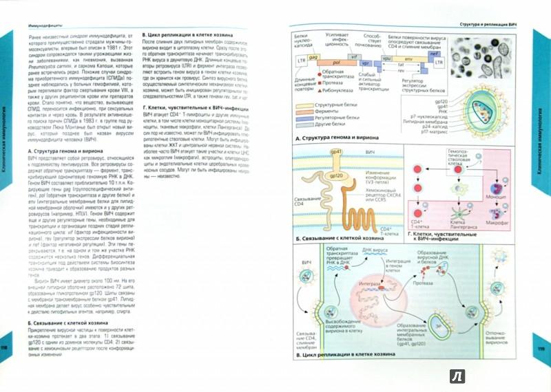 Иллюстрация 1 из 10 для Наглядная иммунология - Бурместер, Пецутто, Вирт | Лабиринт - книги. Источник: Лабиринт