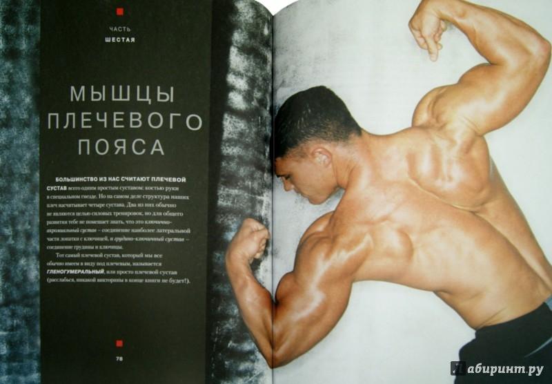 Иллюстрация 1 из 28 для Большая книга мышц. Гениальный путеводитель по идеальной физической форме - Кинг, Шулер | Лабиринт - книги. Источник: Лабиринт
