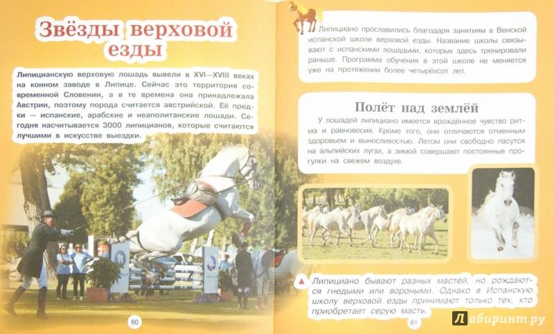Иллюстрация 1 из 8 для Лошади и пони - Анна Спектор | Лабиринт - книги. Источник: Лабиринт