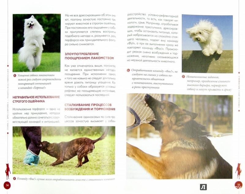 Иллюстрация 1 из 8 для Вредные привычки собак. Воспитание без стресса - Арсений Нестеров   Лабиринт - книги. Источник: Лабиринт