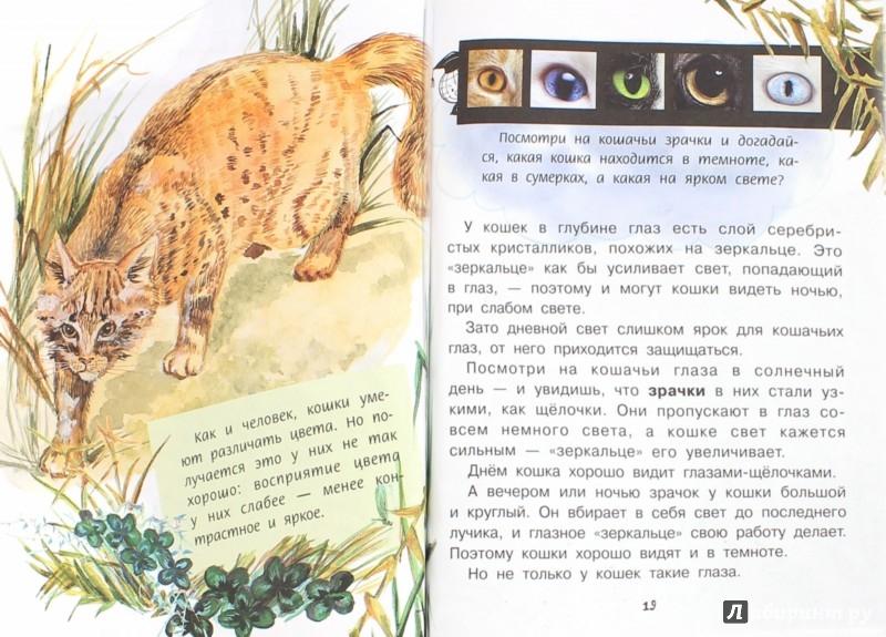 Иллюстрация 1 из 47 для Сколько глаз у стрекозы? - Виталий Танасийчук | Лабиринт - книги. Источник: Лабиринт