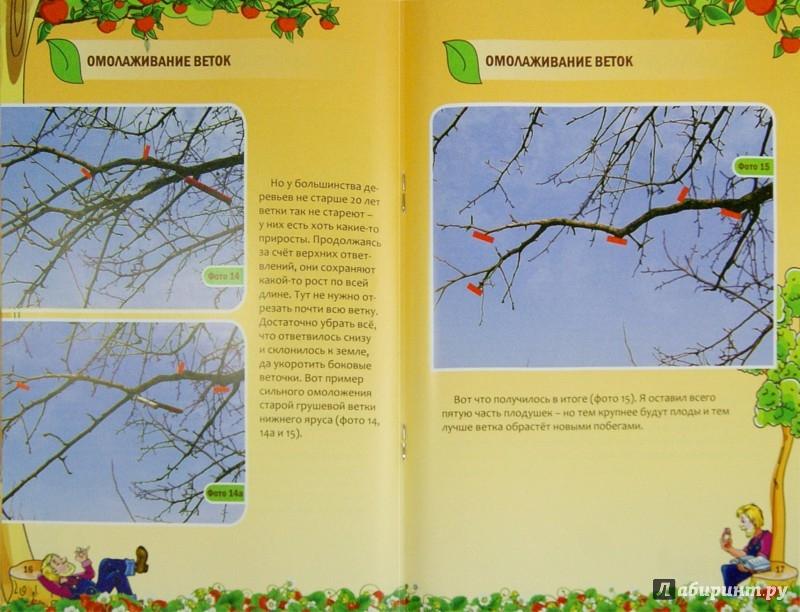Иллюстрация 1 из 12 для Как омолодить постаревшее дерево - Николай Курдюмов | Лабиринт - книги. Источник: Лабиринт