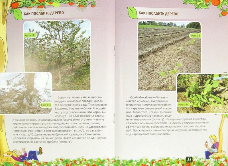 Иллюстрация 1 из 13 для Как посадить дерево - Николай Курдюмов | Лабиринт - книги. Источник: Лабиринт