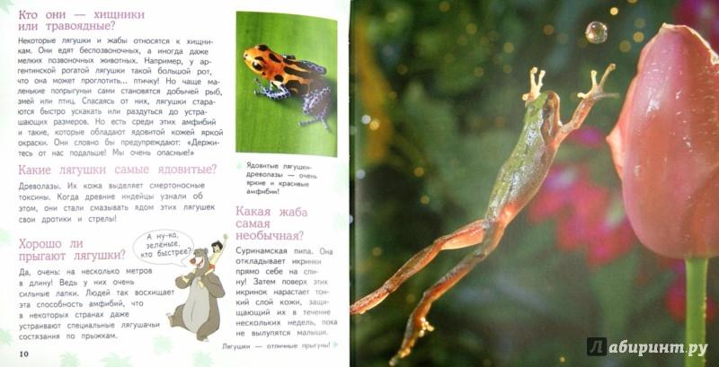 Иллюстрация 1 из 14 для Рептилии и амфибии | Лабиринт - книги. Источник: Лабиринт