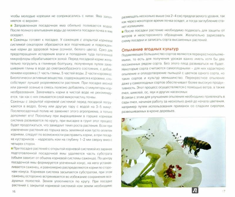 Иллюстрация 1 из 4 для Ягодные культуры - Александр Довганюк | Лабиринт - книги. Источник: Лабиринт