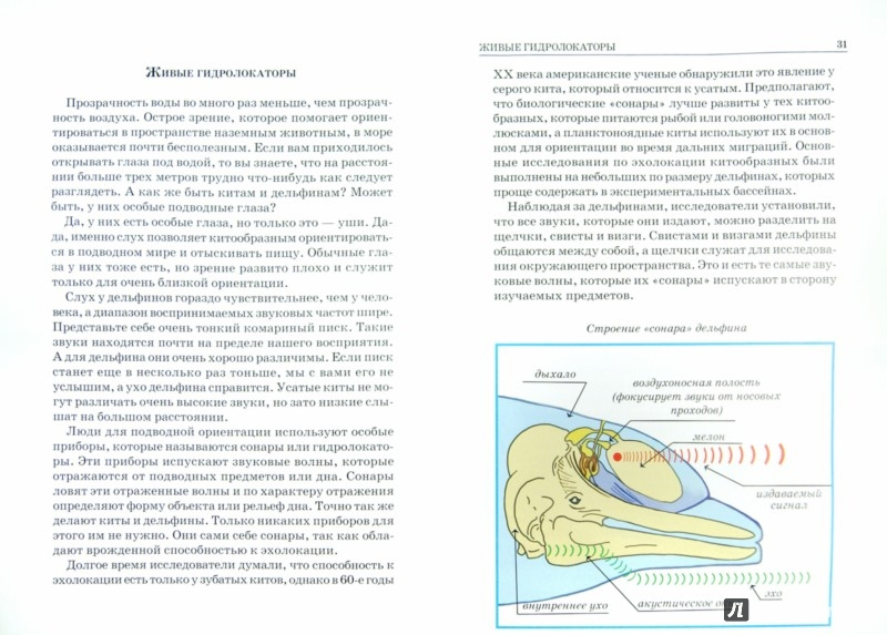 Иллюстрация 1 из 21 для Дельфины и киты - Юлия Дунаева   Лабиринт - книги. Источник: Лабиринт