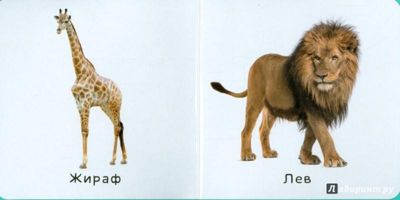 Иллюстрация 1 из 7 для Животные | Лабиринт - книги. Источник: Лабиринт