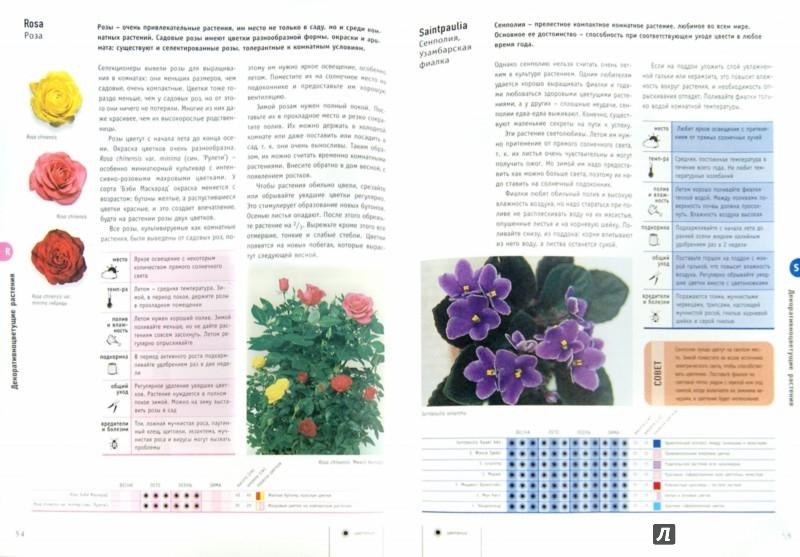 Иллюстрация 1 из 7 для Комнатные растения - Лиа Леендертц | Лабиринт - книги. Источник: Лабиринт
