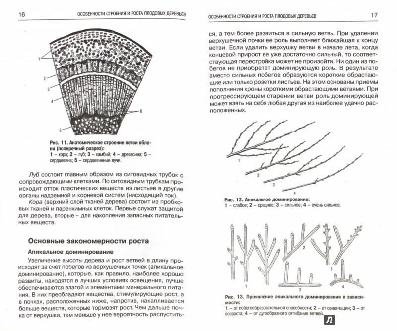 Иллюстрация 1 из 16 для Обрезка и прививка садовых культур. Приемы и техника, садовый инвентарь, уход за кроной - Р. Кудрявец | Лабиринт - книги. Источник: Лабиринт