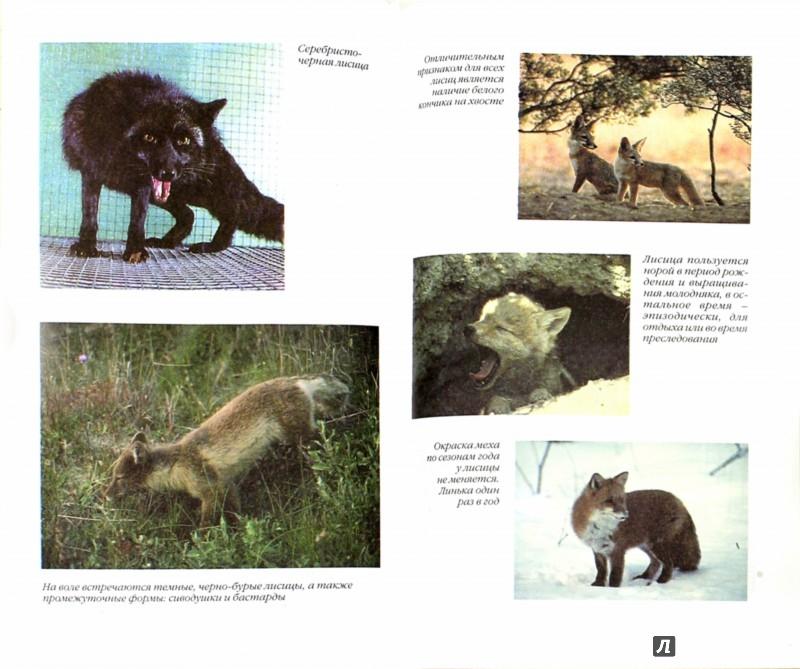 Иллюстрация 1 из 6 для Разведение пушных зверей - Николай Тинаев   Лабиринт - книги. Источник: Лабиринт