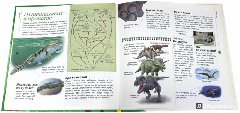 Иллюстрация 1 из 26 для Уникальная иллюстрированная энциклопедия для детей. Животные - Zamarreco, Roig   Лабиринт - книги. Источник: Лабиринт