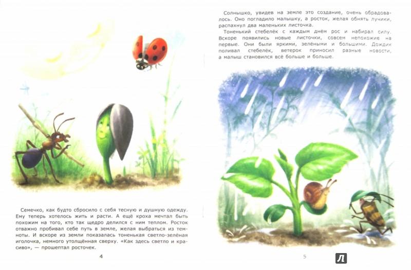 Иллюстрация 1 из 19 для Подсолнух - Лариса Тарасенко | Лабиринт - книги. Источник: Лабиринт