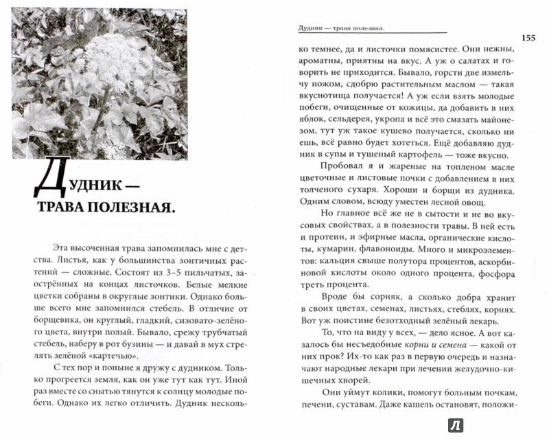 Иллюстрация 1 из 17 для Лес - место силы - Юрий Новиков   Лабиринт - книги. Источник: Лабиринт