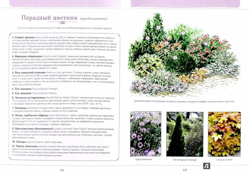 Иллюстрация 1 из 26 для Азбука садового участка. Ландшафтный дизайн для начинающих - Галина Кизима | Лабиринт - книги. Источник: Лабиринт